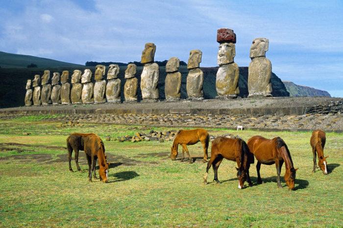 «Никакого экоцида не было»: антропологи опровергли «научную» историю острова Пасхи Эволюция, Наука, Теория эволюции дарвинизм антр