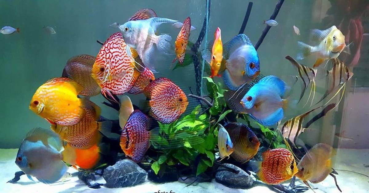 картинки всех рыбок в аквариуме книги