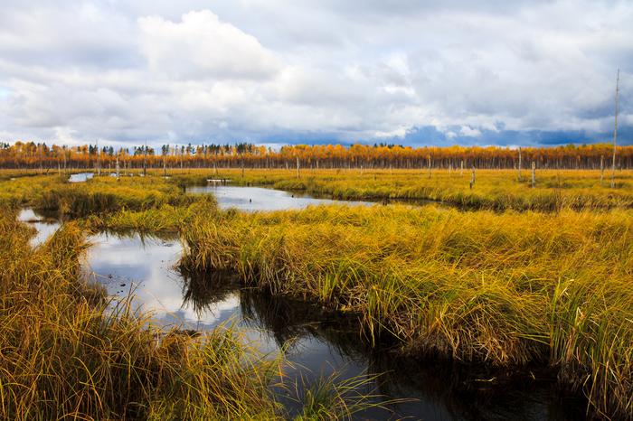 Тёплый осенний ПВД Осень, Лес, Canon, Canon 1100d, Поход, Поход выходного дня, Туризм, Фотография