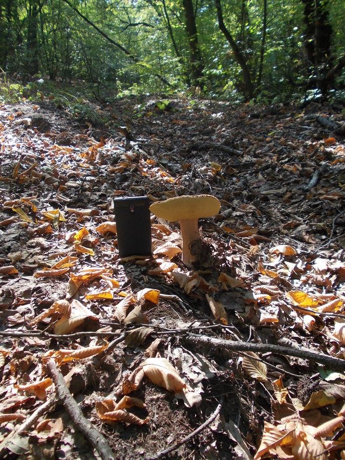 гриби незнакомый