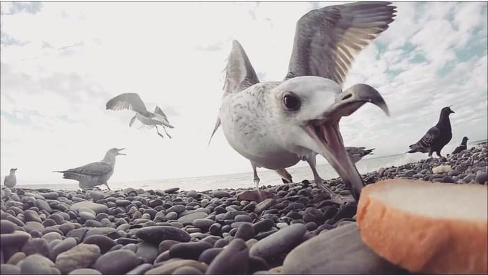 Чайки Gopro, Чайки, Море, Удачный кадр