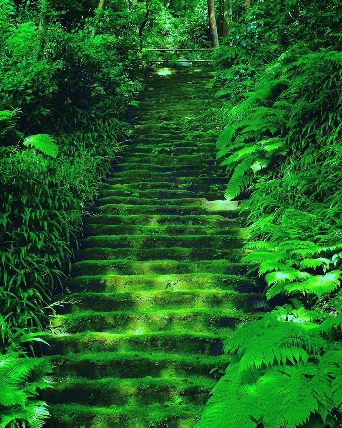 Заросшая мхом лестница в Камакуре, Япония.