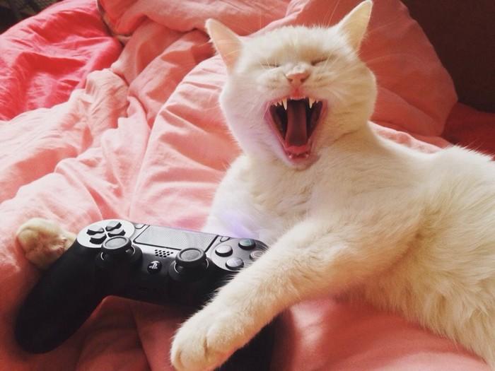 Кошка Кот, Кошка по имени Кошка