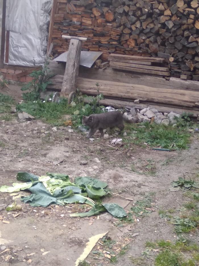 Гости. Кот, Уличный, Деревня, Длиннопост