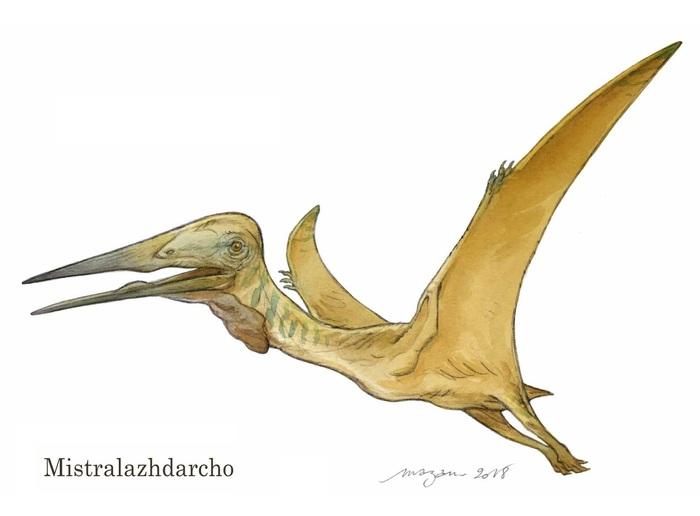 Во Франции открыли птерозавра с труднопроизносимым названием Палеонтология, Птерозавры, Наука, Открытие, Животные, Эволюция, Биология, Длиннопост