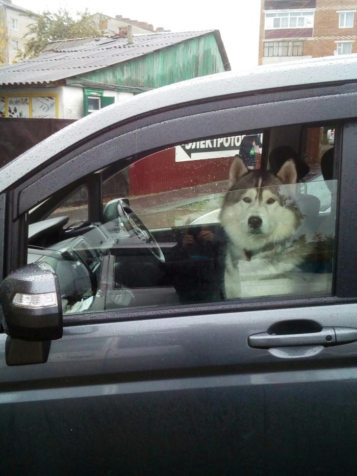 Думал, что водитель Хаски, Водитель, Машина