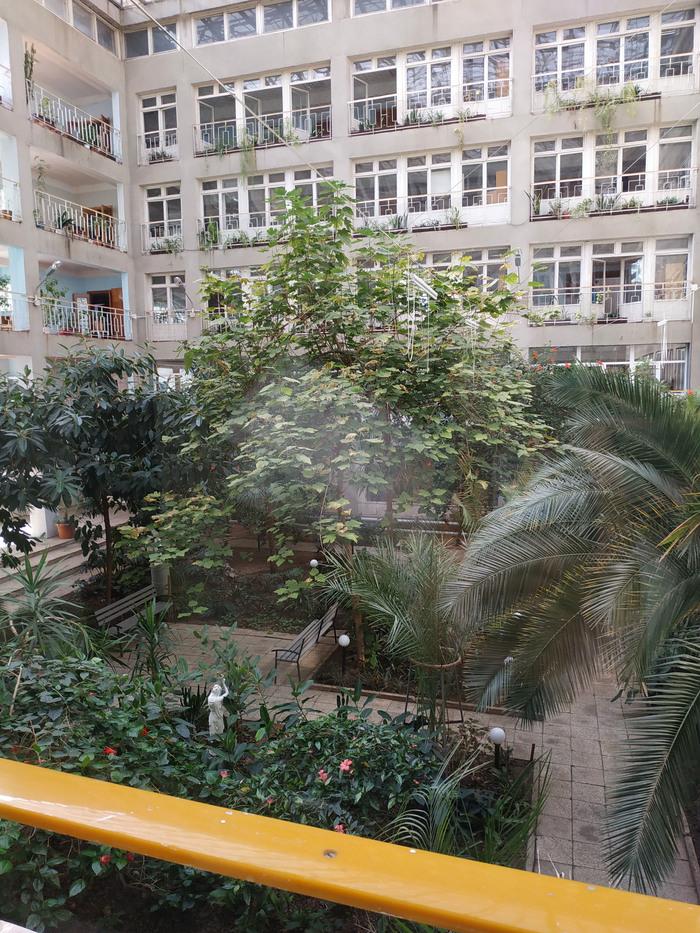 Я тоже пришел в городскую поликлинику иликак должна выглядеть настоящая оранжерея Поликлиника, Зимний сад, Харьков, Больница, Длиннопост