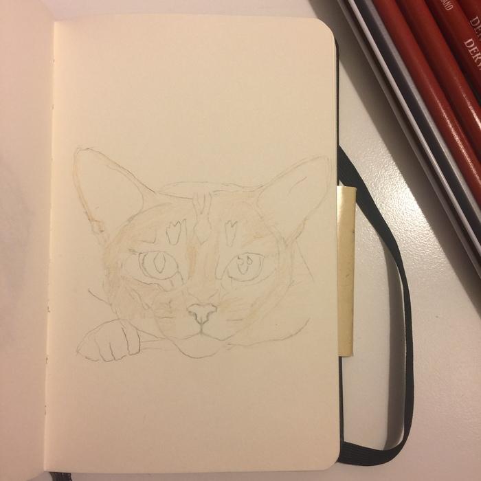 Абиссинский котик. Немного фото процесса. Кот, Арт, Цветные карандаши, Длиннопост, Абиссинская кошка, Животные, Анималистика, Рисунок