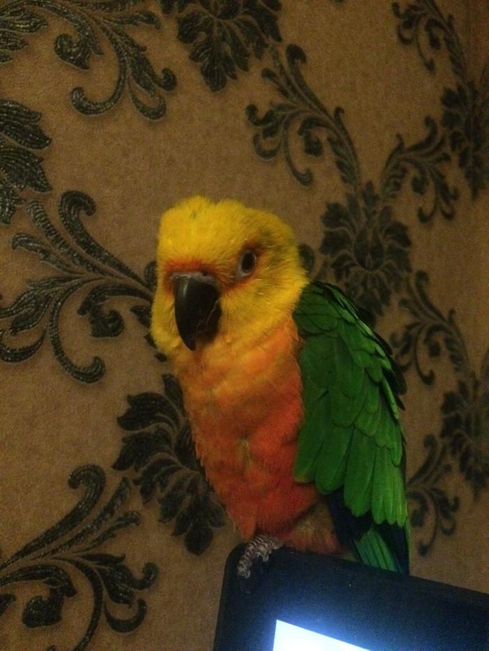 Запихивает трусы у попугая — pic 14