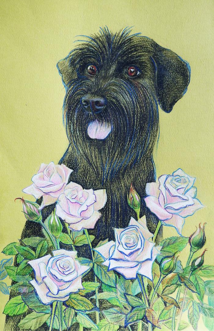 Чародей Рисунок, Цветные карандаши, Портреты животных, Цветы, Миттельшнауцер, Собака, Животные, Анималистика