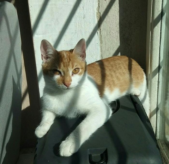 Помогите крохе-котёнку найти дом Челябинская область, В добрые руки, Кот, Длиннопост, Без рейтинга