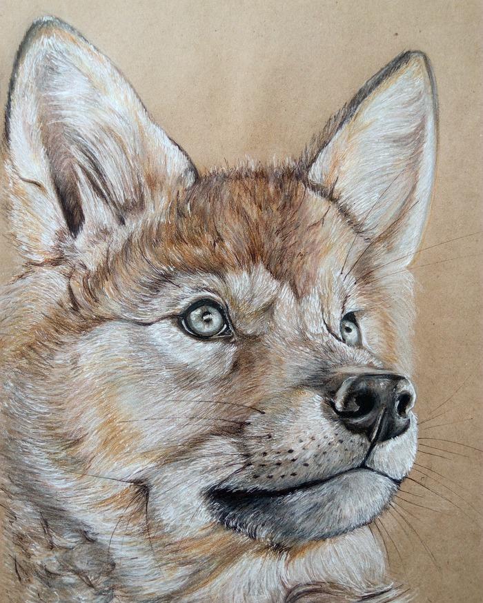 Волчонок