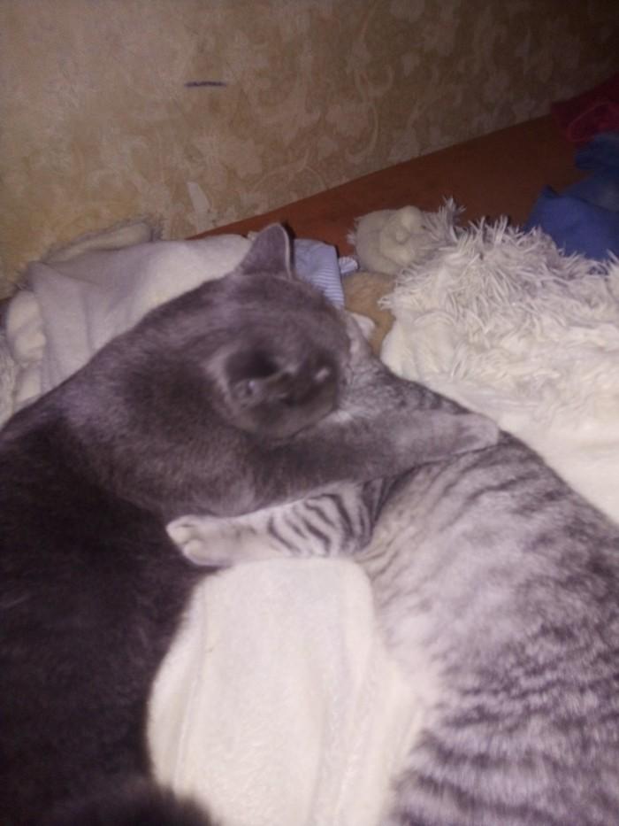 Это любовь. Кот, Любовь, Делать нечего, Длиннопост