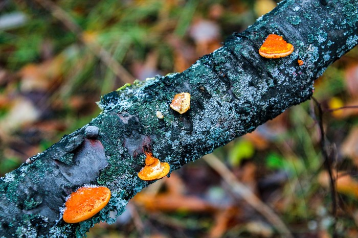 Фотопрогулка Длиннопост, Дзержинск, Фотография, Canon EOS 1300d, Природа, Huawei mate 9