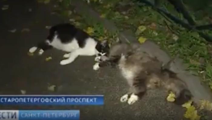 Вломились в квартиру и убивали кошек на глазах пенсионерки Жесть, Кот, Живодеры, Видео, Негатив