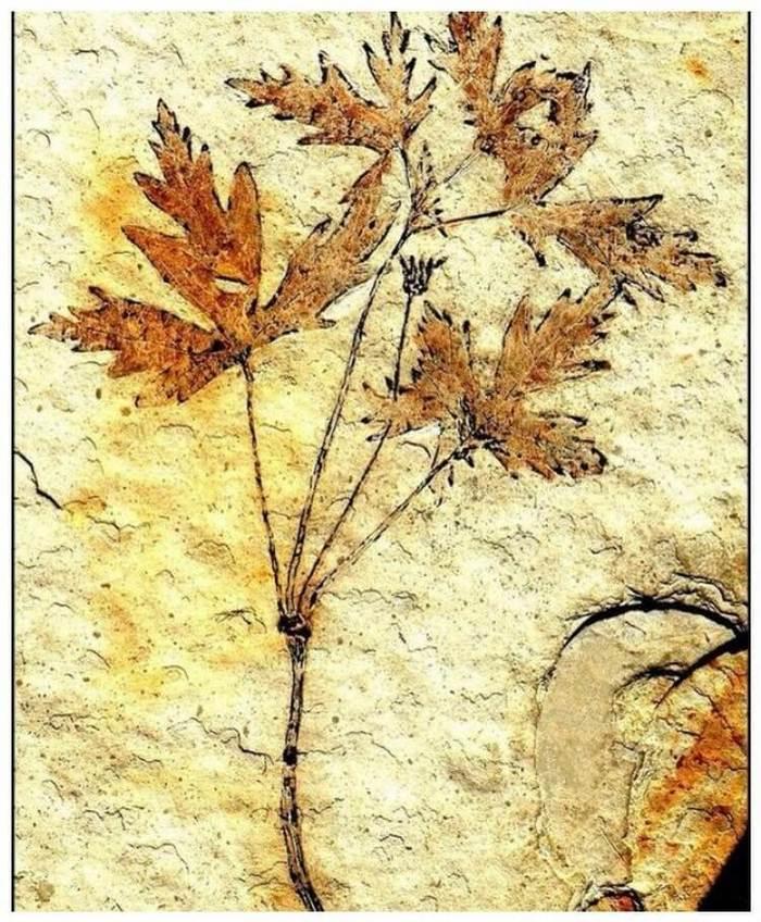 Невероятные по своей красоте окаменелости из прошлого Палеонтология, Окаменелости, Земля, Прошлое, Длиннопост