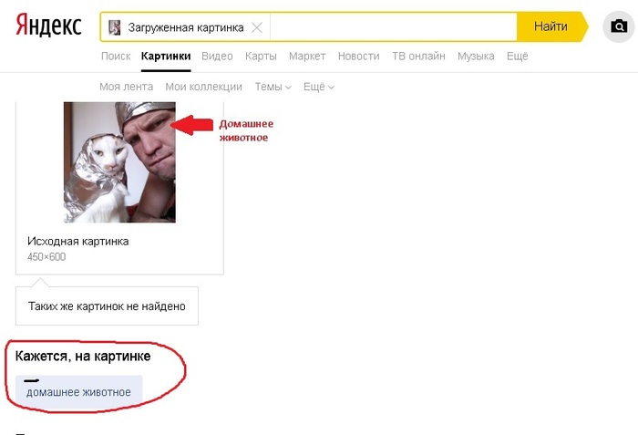 Я Яндекс - я так вижу.Мля и не поспоришь)))) Кот, Картина, Яндекс