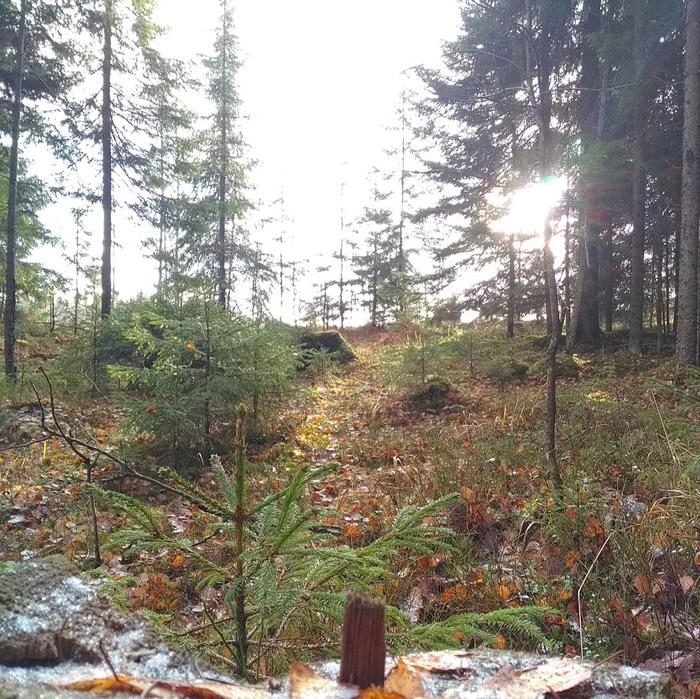 Описание похода 27.10.18 или как это было с моей стороны Длиннопост, Лес, Поход, Ленинградская область, Туризм