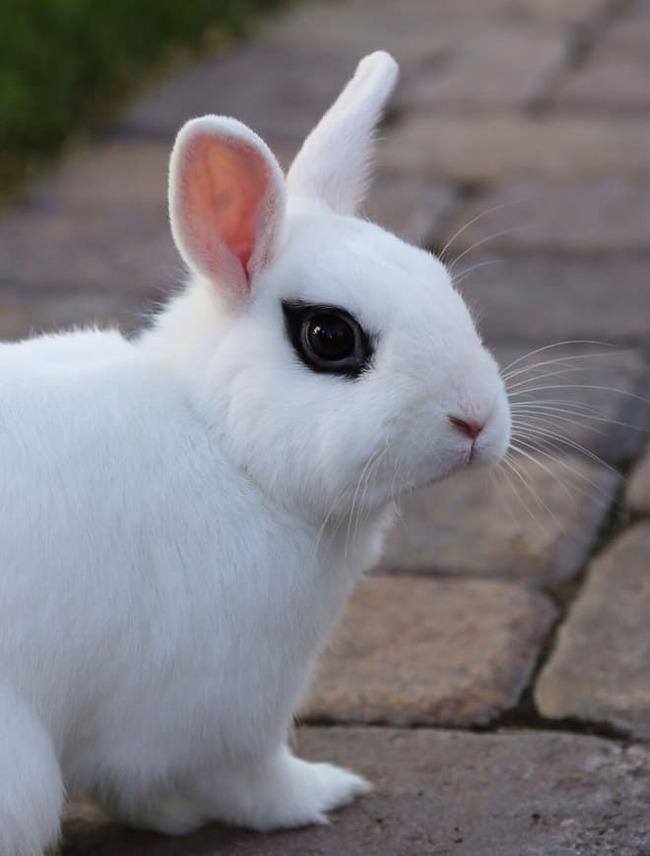 "Кролик ""Smokey Eyes"""