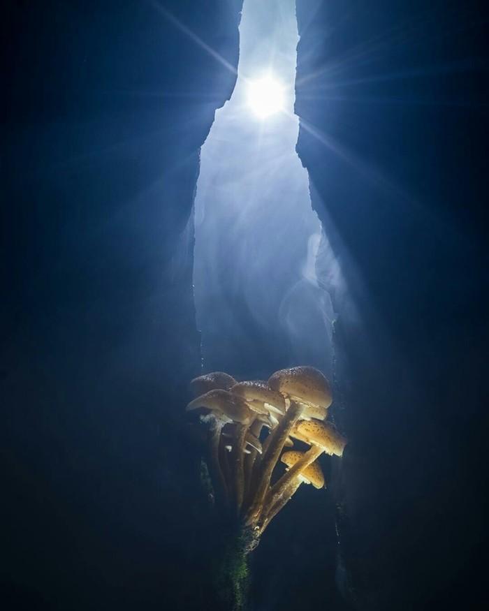 «В ущелье». Опята в старом пне. Подсветка карманным фонарём. Автор фото – Dar_Veter.