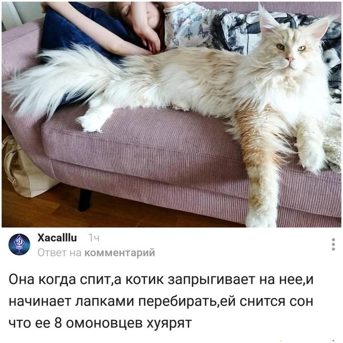 Проблема больших котов Скриншот, Комментарии на Пикабу, Кот, Юмор