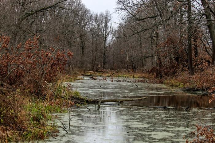 Зарисовка Длиннопост, Фотография, Canon 1300d, Осень, Лечебная грязь, Дзержинск, Грибы