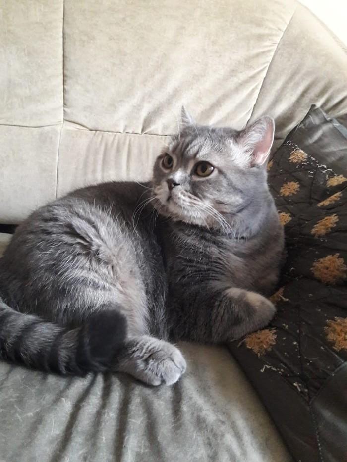 Нужна новая семья для кота в г. Пенза Кот, Ищу дом, Помощь, Длиннопост, Без рейтинга, Помощь животным, Пенза, В добрые руки