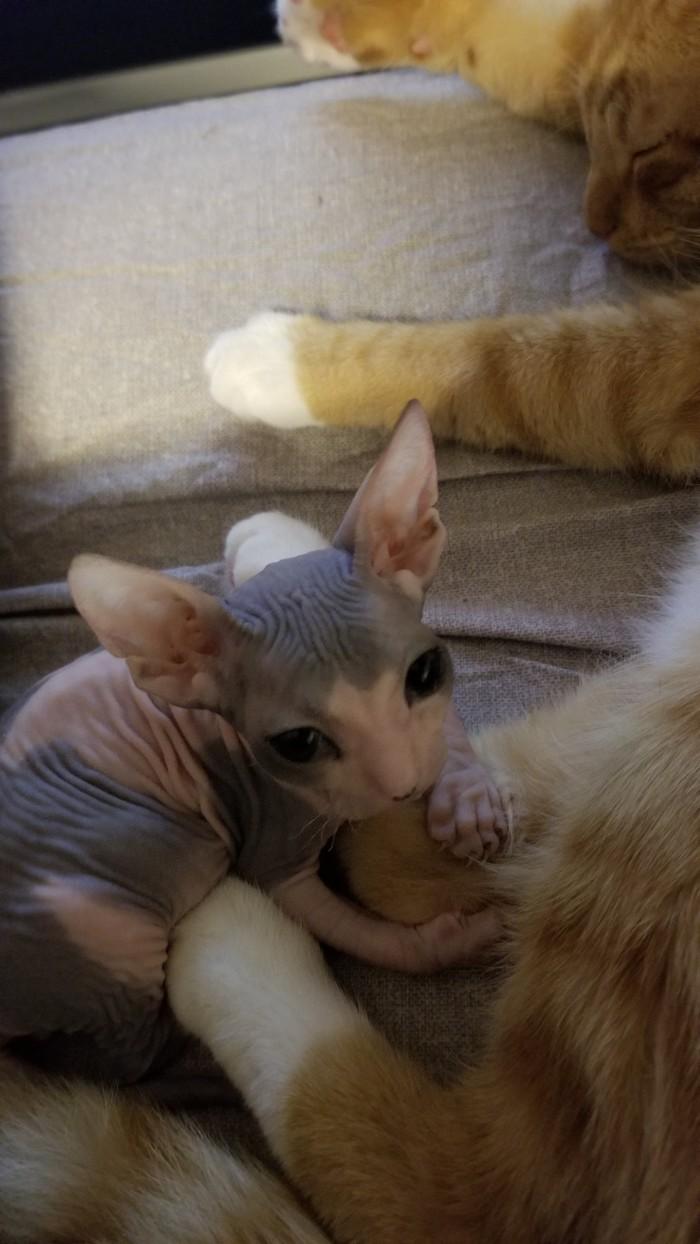Инопланетянин добыл кота