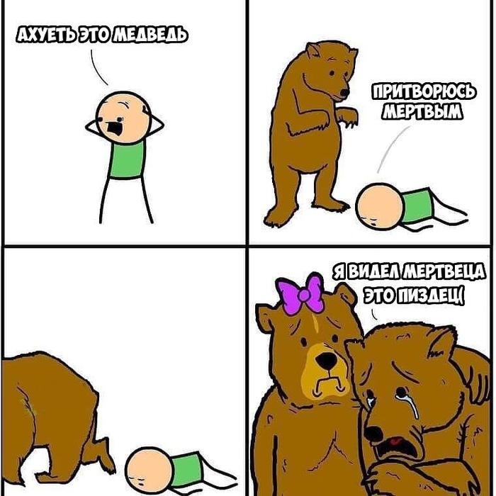 Бедный медведь