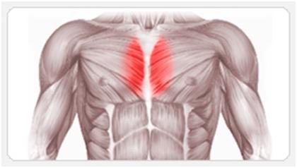 Коротко о том, как проработать внутреннюю часть грудных мышц Спорт, Тренер, Программа тренировок, Спортивные советы, Анатомия, Мышцы, Качалка, ЗОЖ, Длиннопост