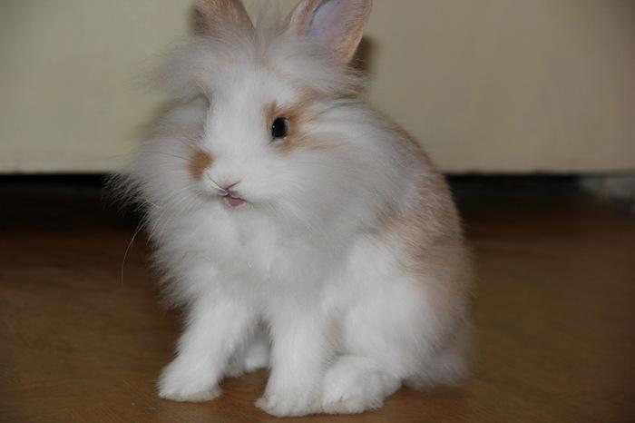 Котики, котики, а вот вам кролик Домашние животные, Кролик, Милота, Длиннопост