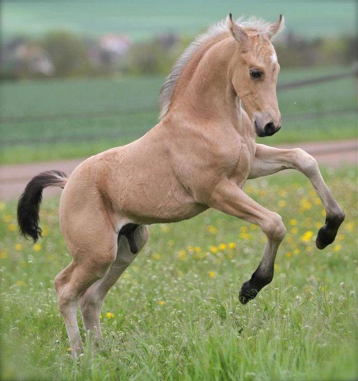 Синдром Вобблера у лошадей – жестокий недуг спинного мозга Лошадь, Жеребенок, Ветеринария, Синдром вобблера, Видео, Длиннопост
