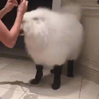 Но я же собака...