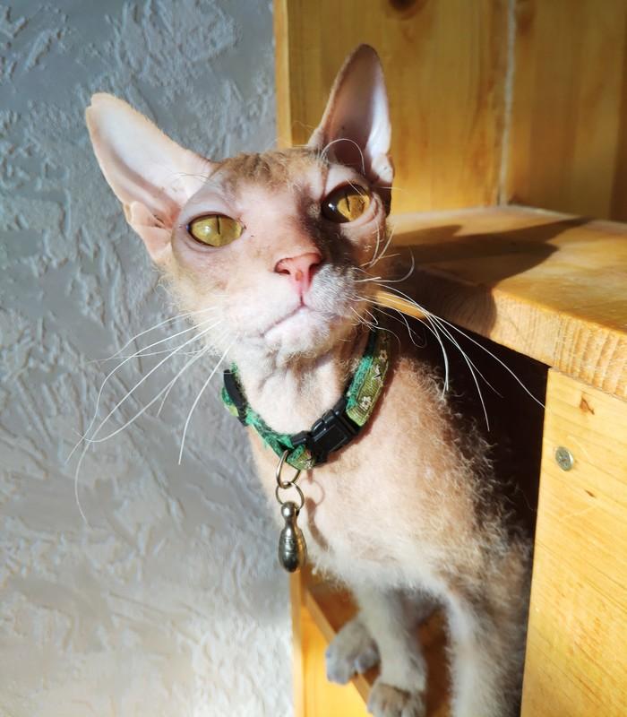 Без политики, скандалов и жести. Просто котик на солнышке Кот, Солнце, Фотография, Милота, Длиннопост
