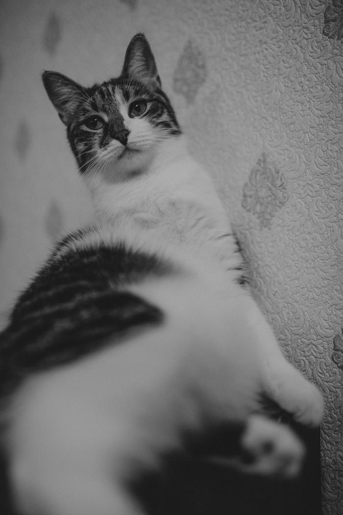 Немного ч/б кошатины вам в ленту Котомафия, Черно-Белое фото, Кот, Сидит, Длиннопост