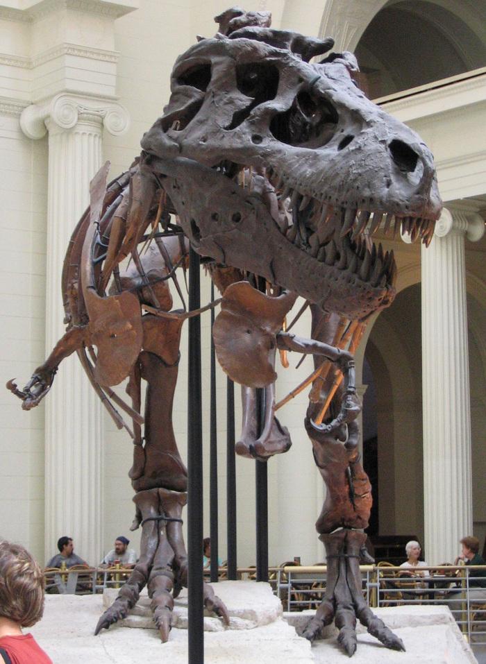 Сколько стоит динозавр? Палеонтология, Ископаемые, Динозавры, Цены, Длиннопост