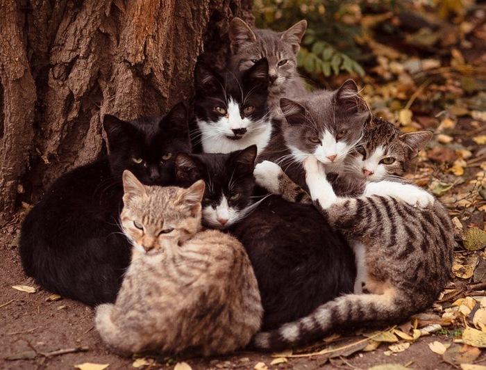 Одесские котейки