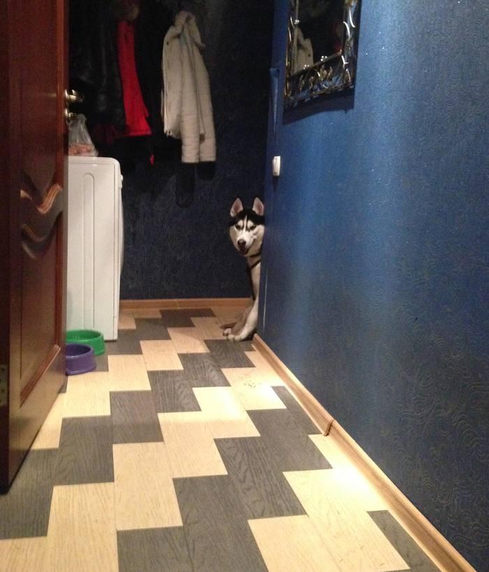 Мастер слежки