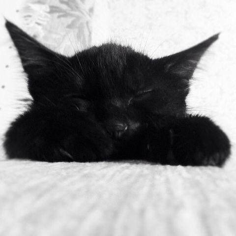 На волне постов про котов и кошек. Кот, Питомец, До и после, Длиннопост