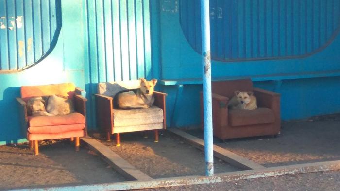 Автобусные остановки, которые мы заслужили ! Остановка, Собака, Комфорт, Бугульма, Дворняга, Фотография
