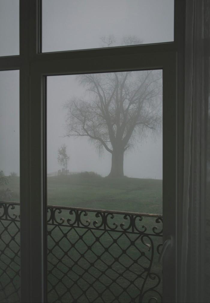 Уют осени Осень, Туман, Природа, Дерево, Окно, Вид из окна, Canon, Canon 1200d