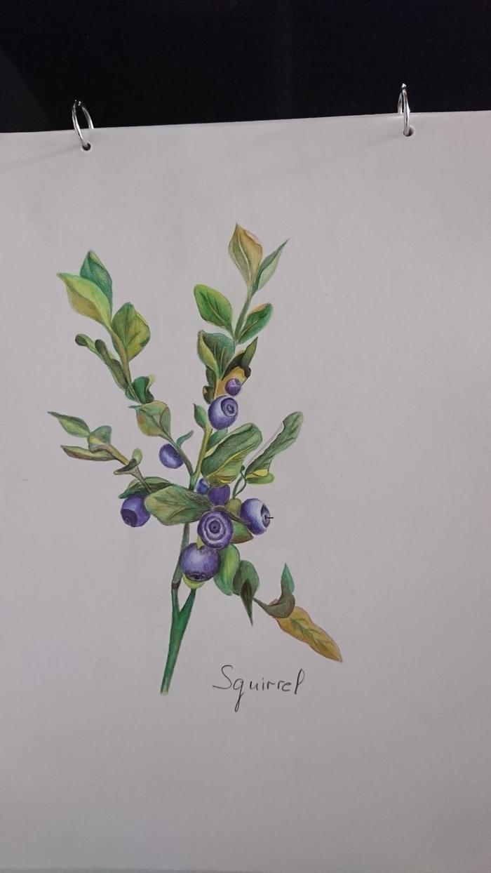 Ботаническая иллюстрация карандашами Арт, Цветные карандаши, Учусь рисовать, Ботаническая иллюстрация, Рисунок, Растения, Черника
