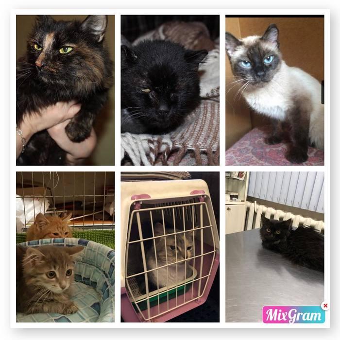 Кошки, живущие в переносках (МО, Купавна) Купавна, Живодеры, Видео, Длиннопост, Кот