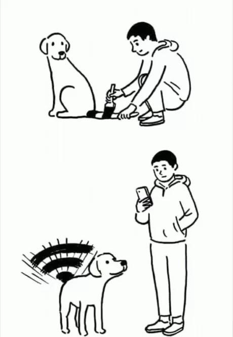 Собака,вайфай-раздавака