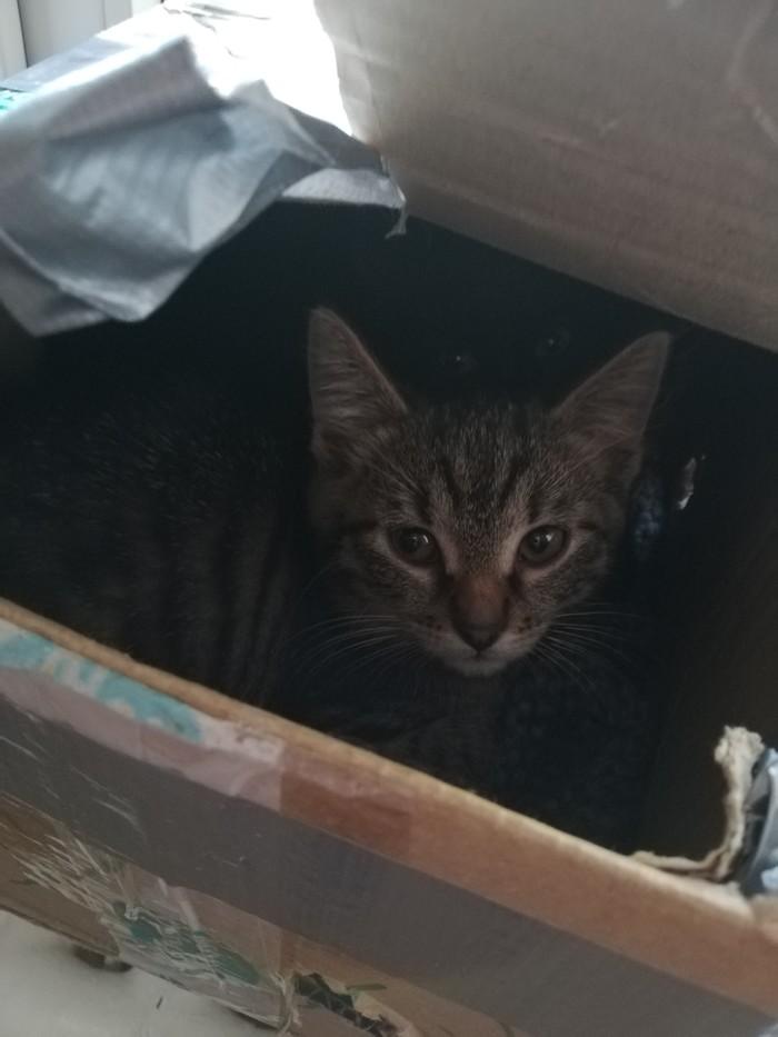 Три котёнка из коробки!!! Котята, В добрые руки, Помощь животным, Длиннопост, Кот, Москва, Зеленоград, Московская область