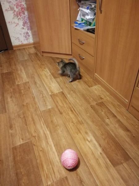 Котёнок ищет дом, помоги ему, Пикабу) Новокузнецк, Кот, Пристрою, Помощь, Животные, В добрые руки, Видео, Длиннопост, Без рейтинга