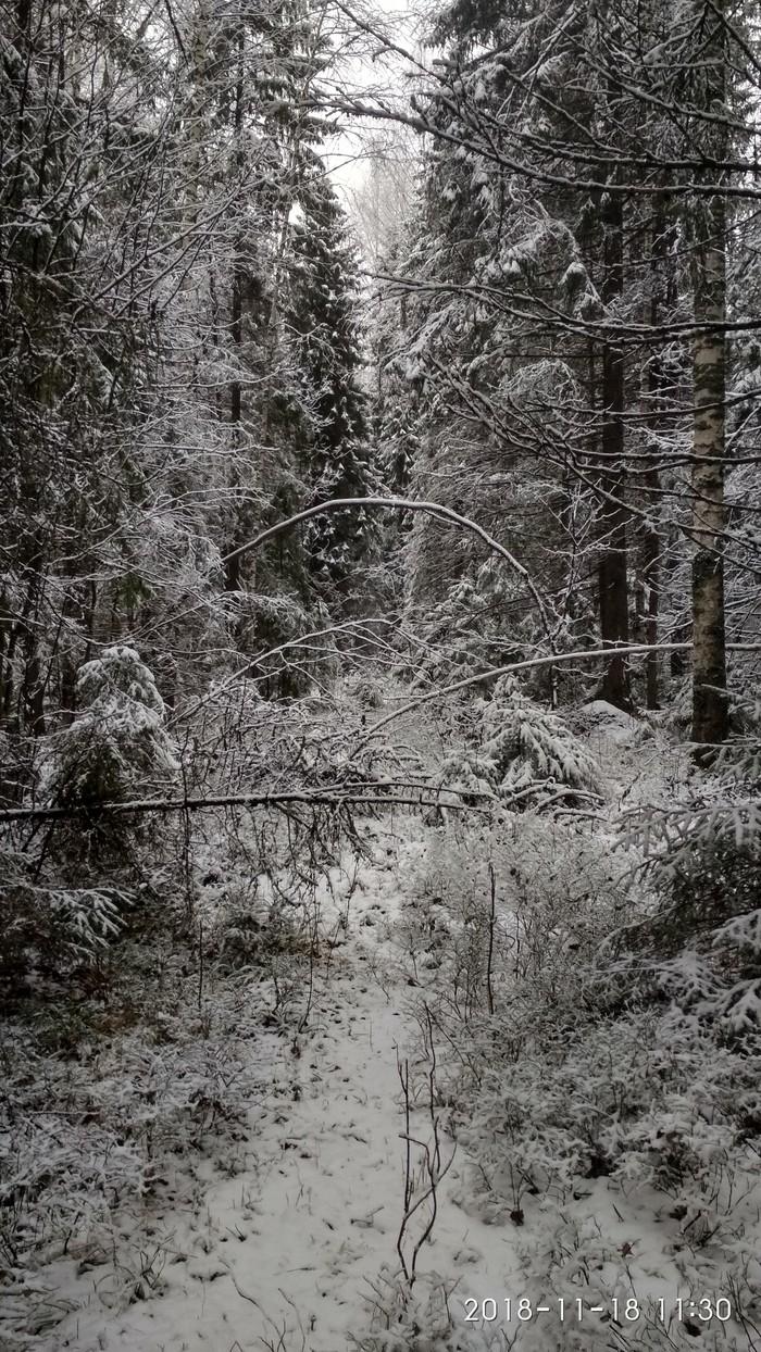 Поход в лес, по первому снегу. Охота, Первый снег, Прогулка по лесу, Птичку жалко, Длиннопост