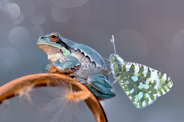 Бабочки в моём животе Лягушка, Бабочка, Фотография