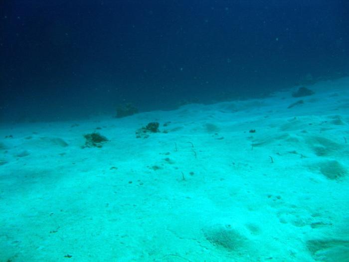 Океаны с трудом справляются с поглощением антропогенного углекислого газа из атмосферы Климат, Антропогенные факторы, Океанология, Наука, Копипаста, Elementy ru, Длиннопост
