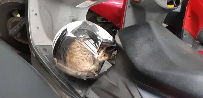 Чтобы уехать , пришлось разбудить Кот, Шлем, Уснул, Скутер, Нашел место спать